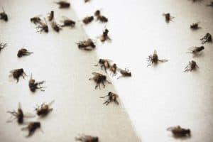 Come liberarsi dalle mosche rimedi ed idee