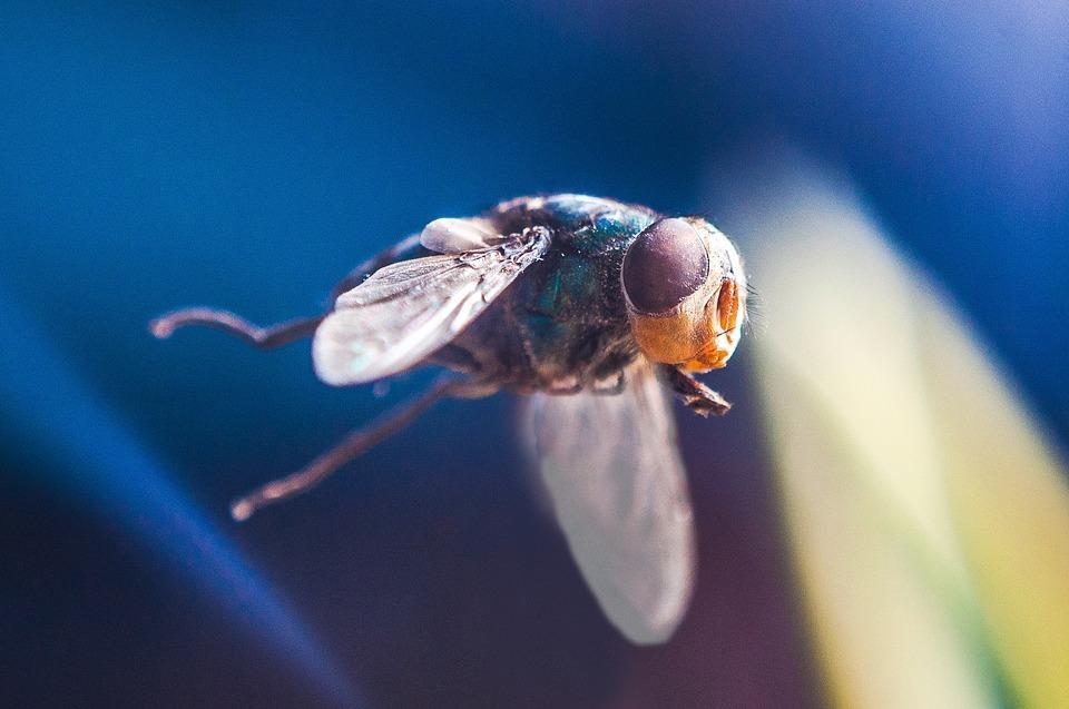 trappole per mosche