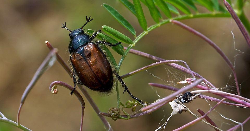 da dove vengono gli scarafaggi in casa