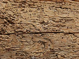 Tarli del legno come eliminarle